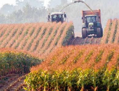 Produits à base de maïs de production Suisse